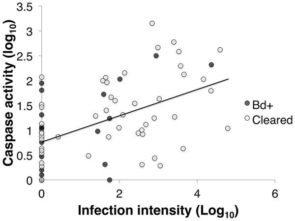 The correlation between infection intensity, Log10(ZE), and caspase 3/7, Log10(Caspase) of inoculated L .v. alpina over the course of the experiment.