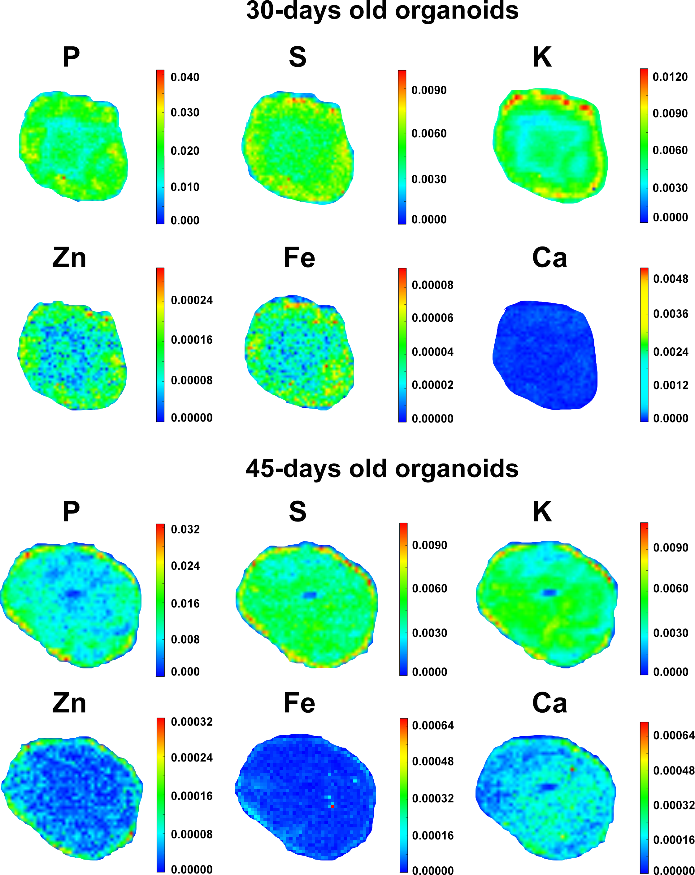 Neurotoxicity Predicted By Organoids >> Trace Elements During Primordial Plexiform Network Formation In