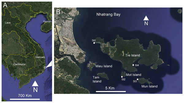 (A) Location of the study area on the Vietnamese coast of the South China Sea. (B) Sampling sites, Nhatrang Bay. Map data: SIO, NOAA, US Navy, NGA, GEBCO. Image (C) 2016 Digital Globe and Google Earth.