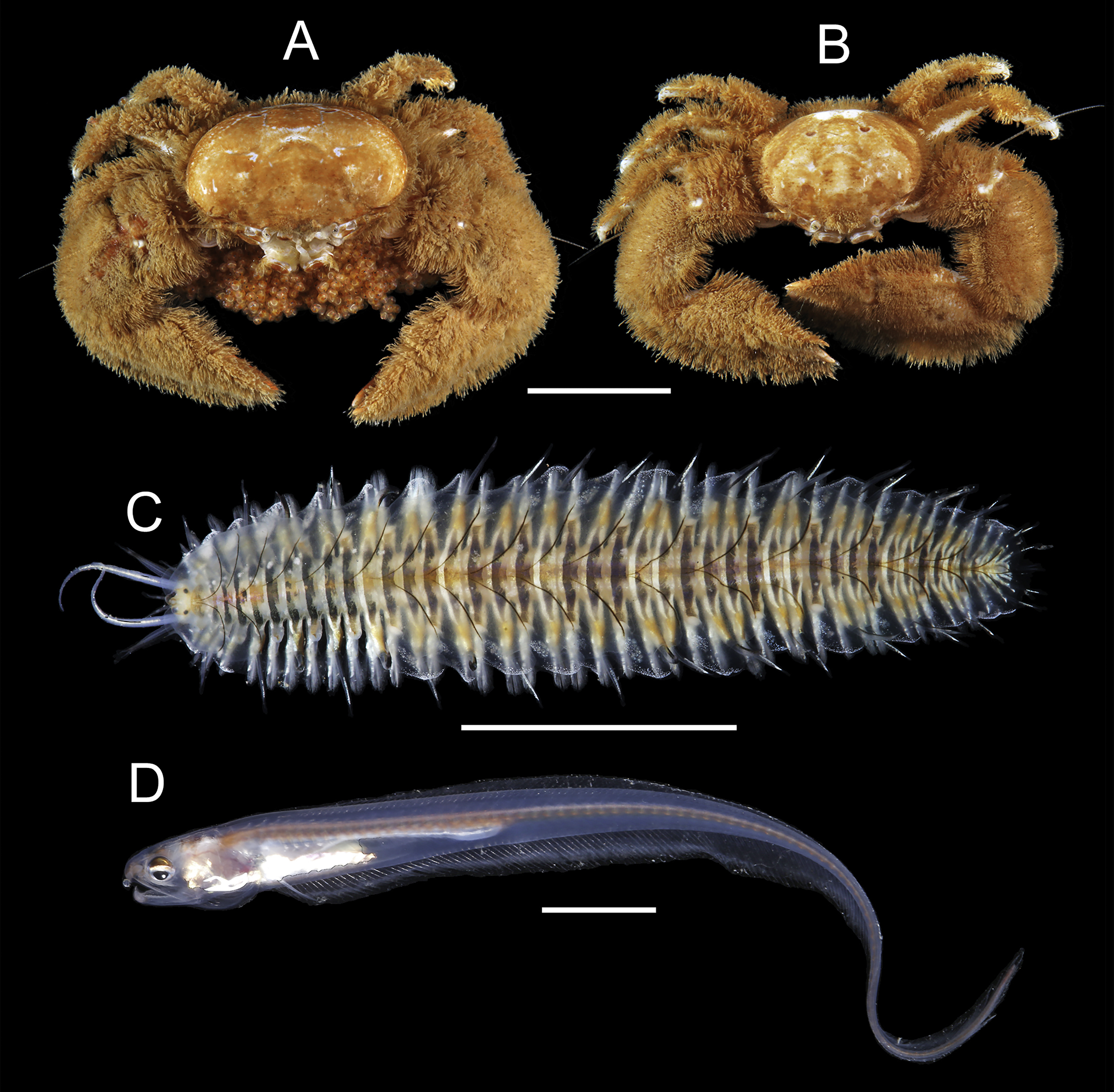 Do Syntopic Host Species Harbour Similar Symbiotic Communities The