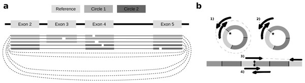 Exon skipping and double-breakpoint fragments.