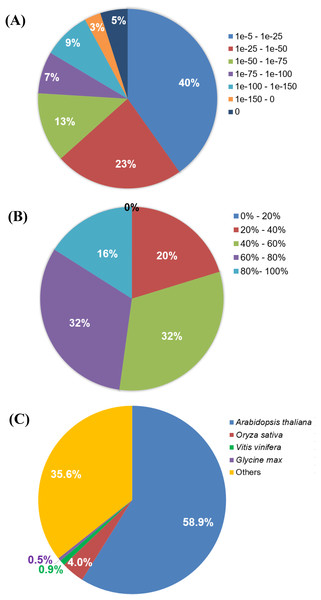 BLASTX analysis of Polygonum minus combined assembly.