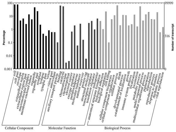 Web Gene Ontology (WEGO) annotation plot of Polygonum minus combined assembly.