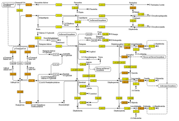 KEGG pathway of flavonoid biosynthesis mapped with combined assembly.