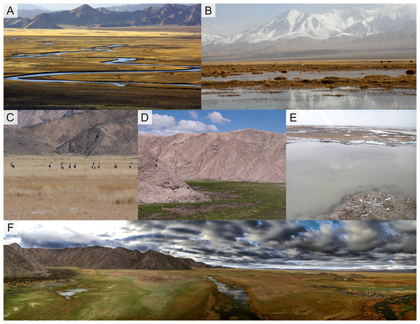 Different wetland landscapes for Black-necked Crane in Yanchiwan National Nature Reserve, Gansu, China.