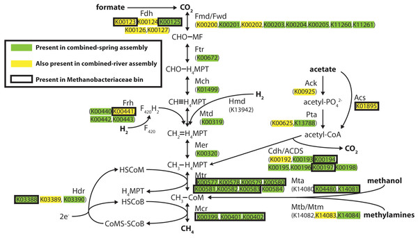Predicted methanogenesis proteins in the combined-spring metagenomic assembly.