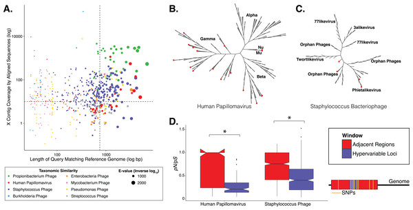 Phylogenetic & evolutionary characteristics of skin virome hypervariable loci.