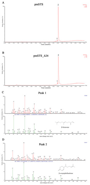 Headspace solid phase microextraction gas chromatography mass spectrometry (HS-SPME-GC-MS) analysis of enzymatic products of recombinant PmSTS and truncated recombinant PmSTS_Δ24.