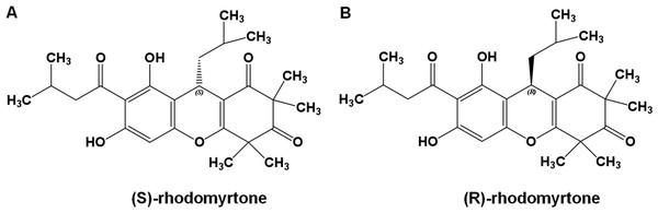 Rhodomyrtone structure.