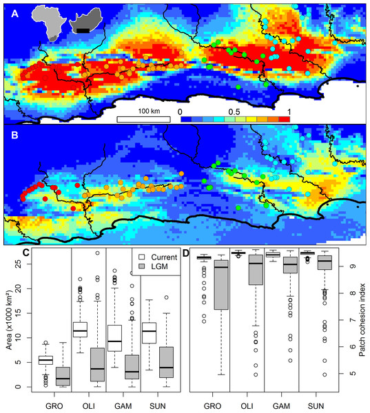 The ensemble of 216 species distribution models of Nymania capensis projected onto (A) present and (B) Last Glacial Maximum (CCSM) simulated and downscaled climate, as well as the changes in climatically suitable (C) area, and (D) patch cohesion index, within each basin.