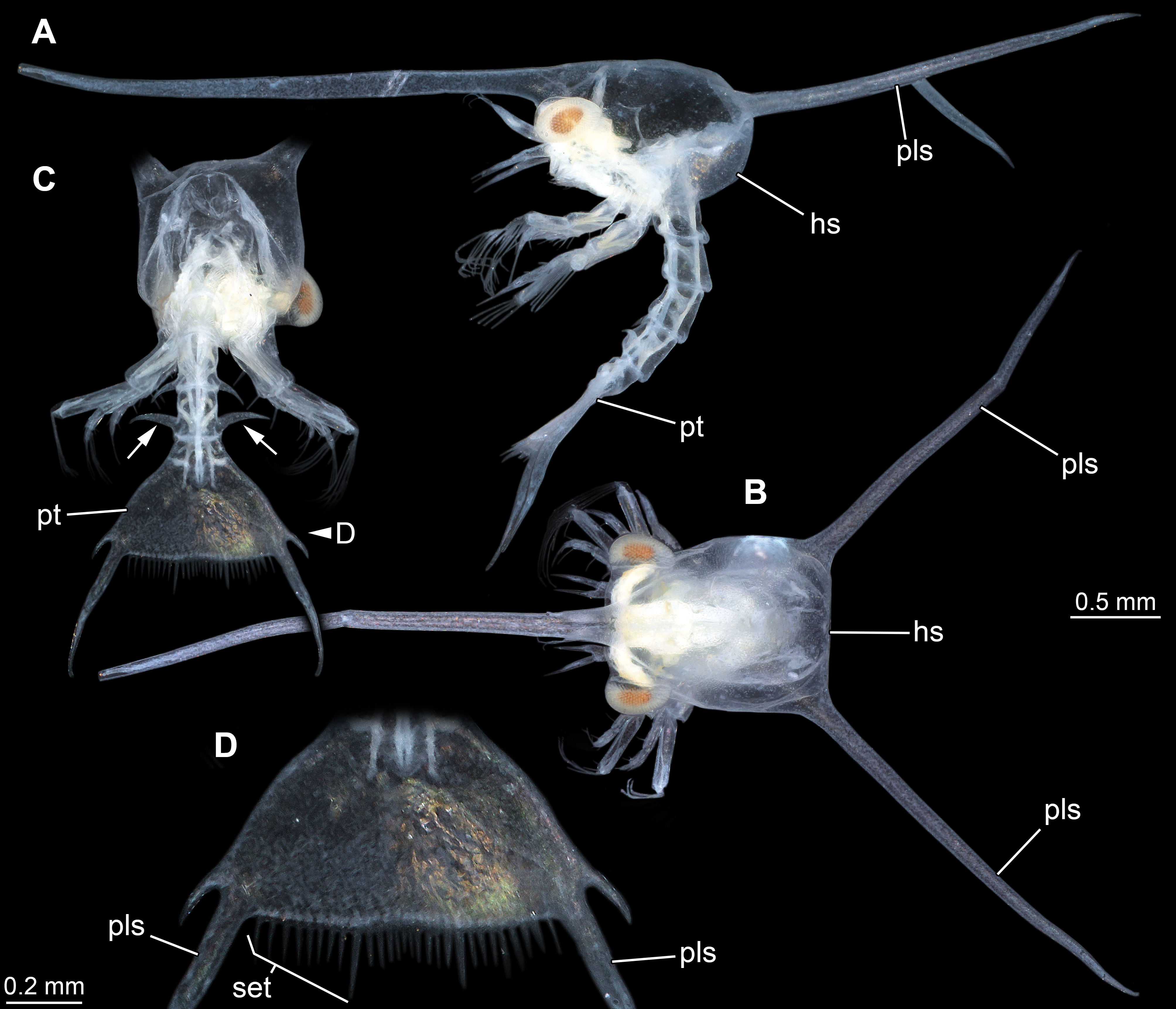 A New Glimpse On Mesozoic Zooplankton150 Million Year Old Lobster
