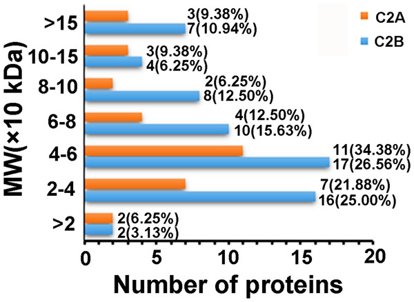 Distributions of the proteins that only interacted with C2A or C2B domains as a function of MW.