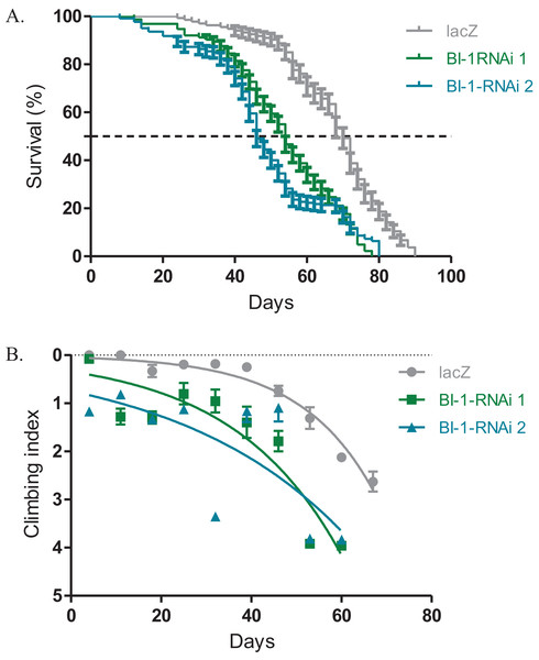 Loss of BI-1 activity decreases survival and impairs climbing ability.