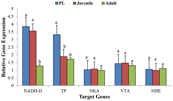 Relative gene expression of five target genes at 3 different life stages of M. koombooloomba (including seven biological replicates for each stage).