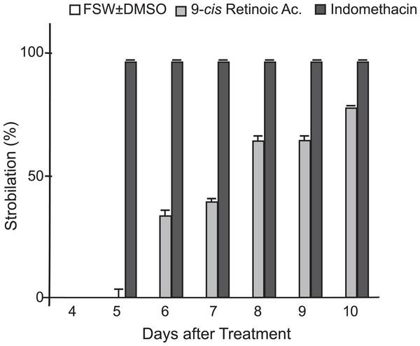 Comparison of indomethacin and 9-cis-retinoic acid effects on strobilation.