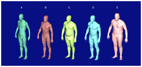 Raw scan outputs of five selected test subjects showing the full range of observed body shapes.