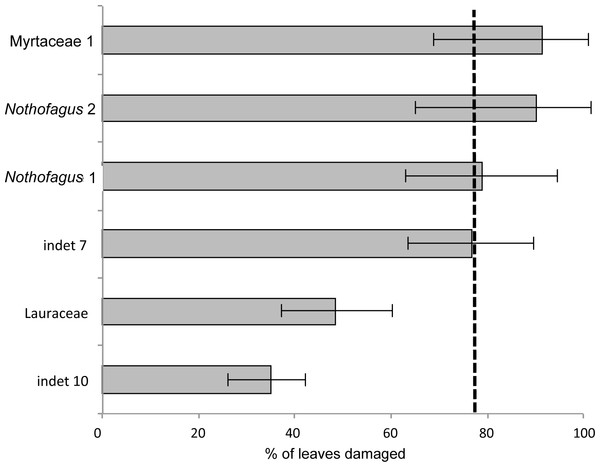 Percentage of damaged leaves for the six most abundant leaf morphotypes from the Hindon Maar (Miocene, New Zealand).