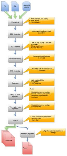 Steps in runDRAP workflow.
