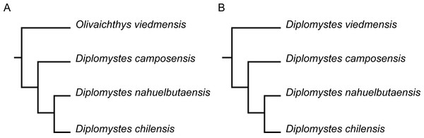 Hypotheses of phylogenetic relationships of species of Diplomystidae.