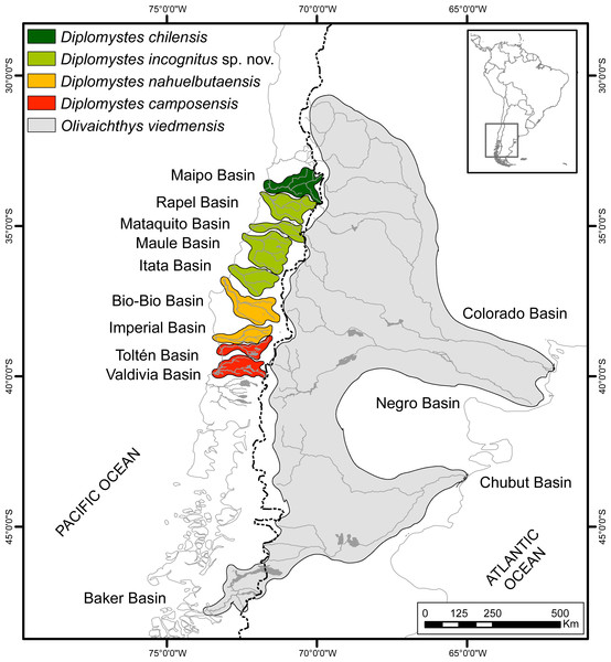 Geographic distribution of diplomystids in Chile and Argentina.