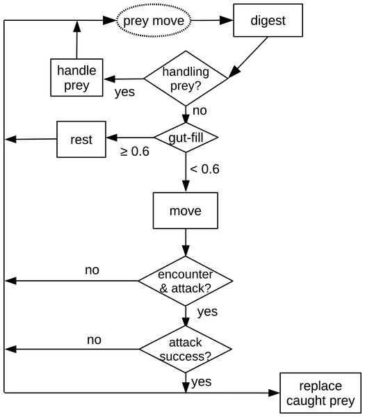 Schematic diagram of processes in the in silico feeding experiment model.