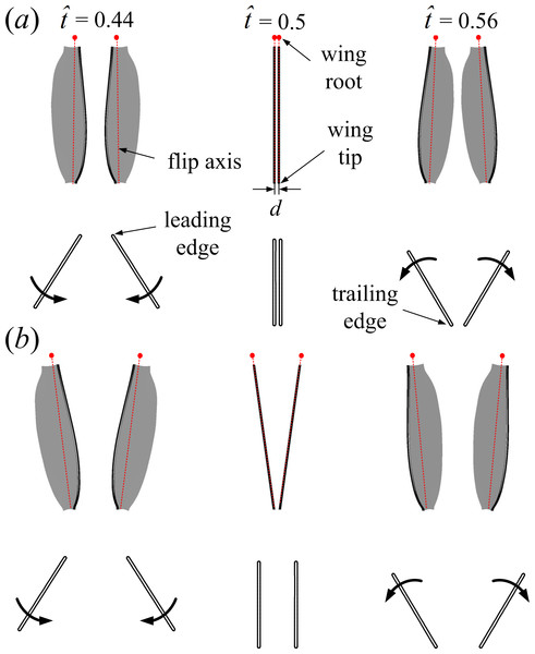 Motions of the wing pair (3D, top view) and the corresponding wing sections (2D, side view) at half-wing length for the full (A) and the partial (B) clap-fling at three time instances (                                                  $\hat {t}=0.44$                                                                                                                      t                                                                                                 ˆ                                                                                       =                            0                            .                            44                                               ,                                                   $\hat {t}=0.5$                                                                                                                      t                                                                                                 ˆ                                                                                       =                            0                            .                            5                                                and                                                   $\hat {t}=0.56$                                                                                                                      t                                                                                                 ˆ                                                                                       =                            0                            .                            56                                               ) during dorsal stroke reversal.