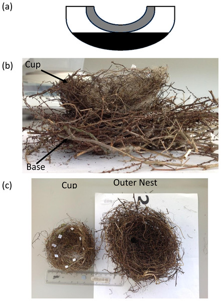 (A) Bullfinch nest deconstruction regions. Grey, Cup wall; White, Outer nest top; Black, Outer nest base. (B) A Bullfinch nest with the upper outer nest removed to reveal the cup in situ and base of the nest. (C) A Bullfinch nest deconstructed into the cup and outer nest components.