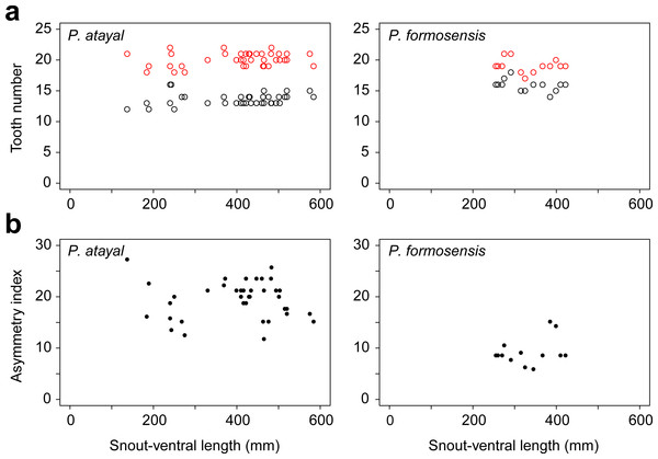 Tooth number and dentition asymmetry of the snakes in association with snout-ventral length (SVL).