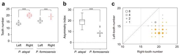Comparison of mandibular tooth numbers and its DA between P. atayal and P. formosanus.