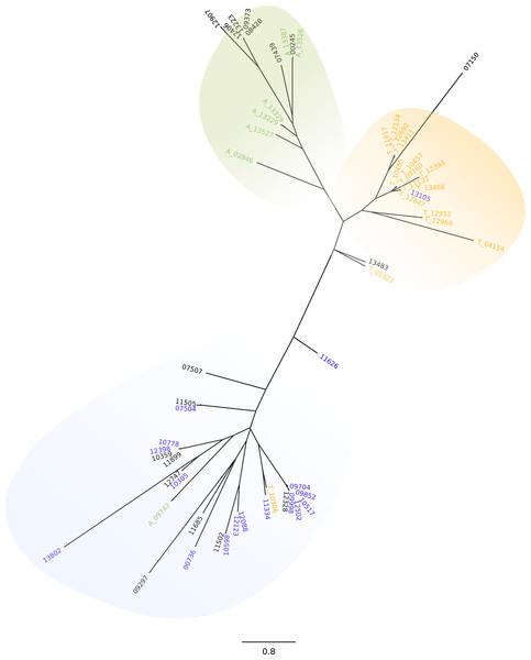 GP63 3′UTR phylogeny.