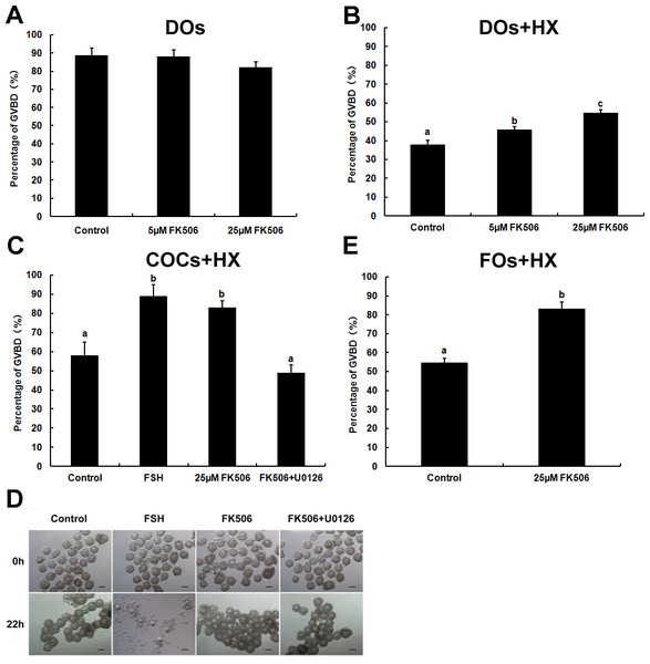 The effects of FK506 on GVBD rate of oocytes and cumulus expansion.