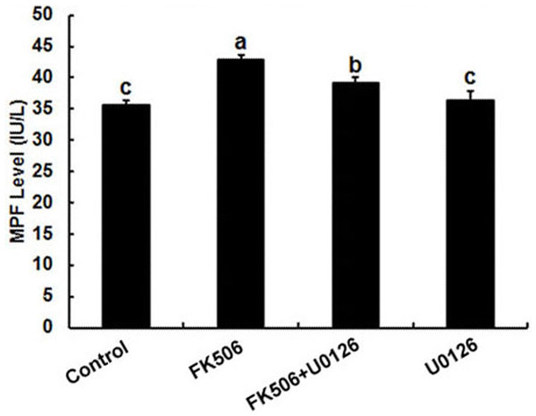 Inhibition of calcineurin by FK506 increased the concentration of MPF in oocytes.