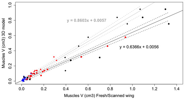 Linear regression plot of wing muscle volumes.