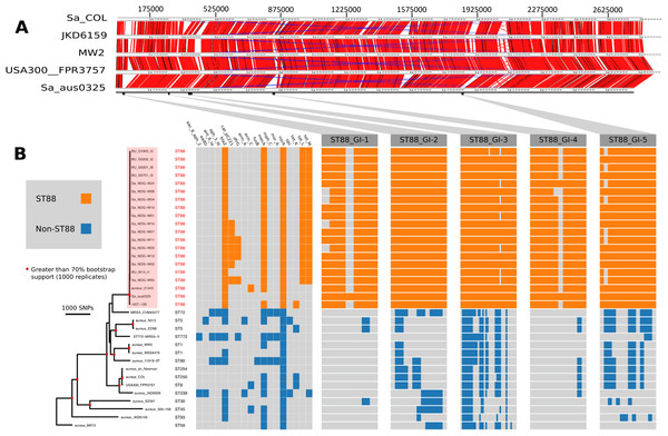 Comparative genomic analysis of S. aureus ST88.