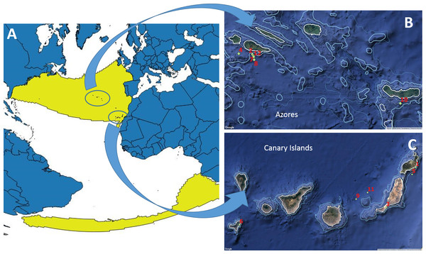 Worldwide known distribution of True's beaked whales (A) and locations of the reports included in this paper (B,C).