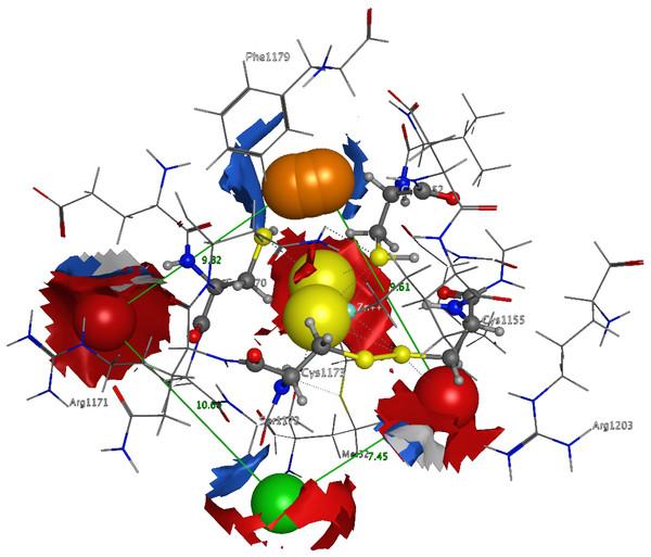 The 3D pharmacophore model for the  Trypanosomabrucei brucei DdRPII RPB1 model.