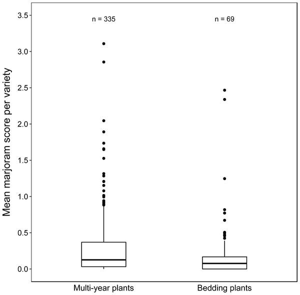 Boxplots of mean marjoram scores of varieties in the two plant longevity categories.