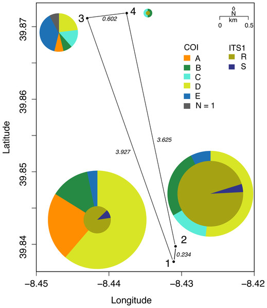 Distribution of mtDNA lineages in Vale da Couda sites.