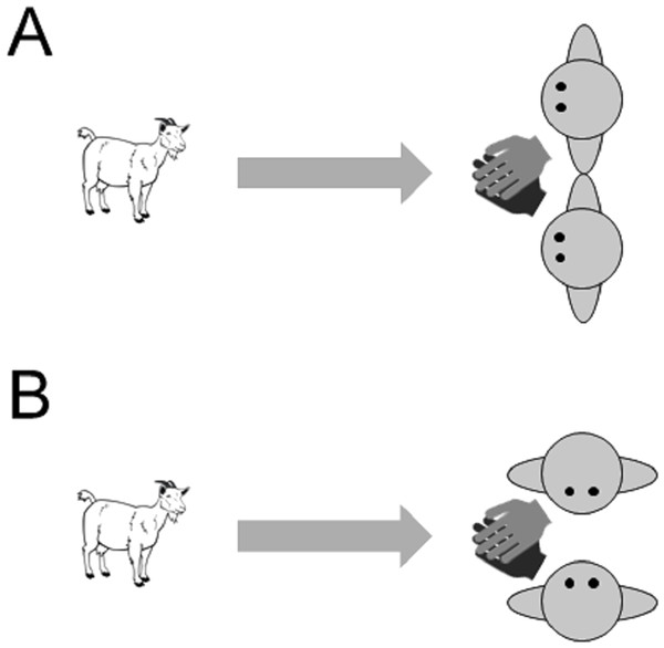 Images of the two training conditions in Experiment 3 (A) attentive training and (B) non-attentive training.
