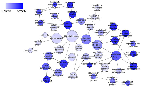 Directed acyclic graph (DAG) of pathways from the perspective of biological process (BP) in gene ontology (GO) analysis.