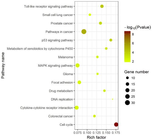 Top 15 Kyoto Encyclopedia of Genes and Genomes (KEGG) pathways of DEGs in HCC.