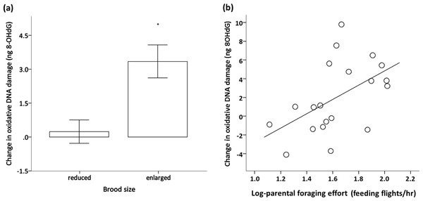 Effect of brood size and foraging effort on oxidative DNA damage.