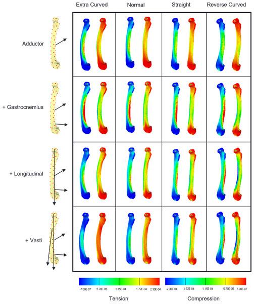 Strain contour maps.