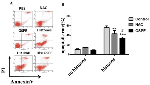 Grape seed proanthocyanidin extract inhibited lymphocyte apoptosis induced by histones.