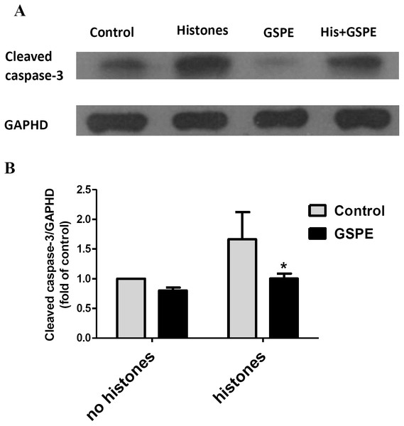 Grape seed proanthocyanidin extract inhibited caspase-3 activation induced by histones.