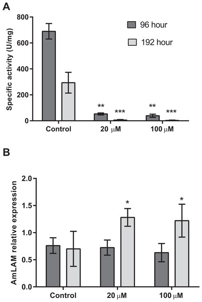 Mannosidase activity and AmLAM gene expression in larvae reared on a diet containing 20 µM and 100 µM of swainsonine.