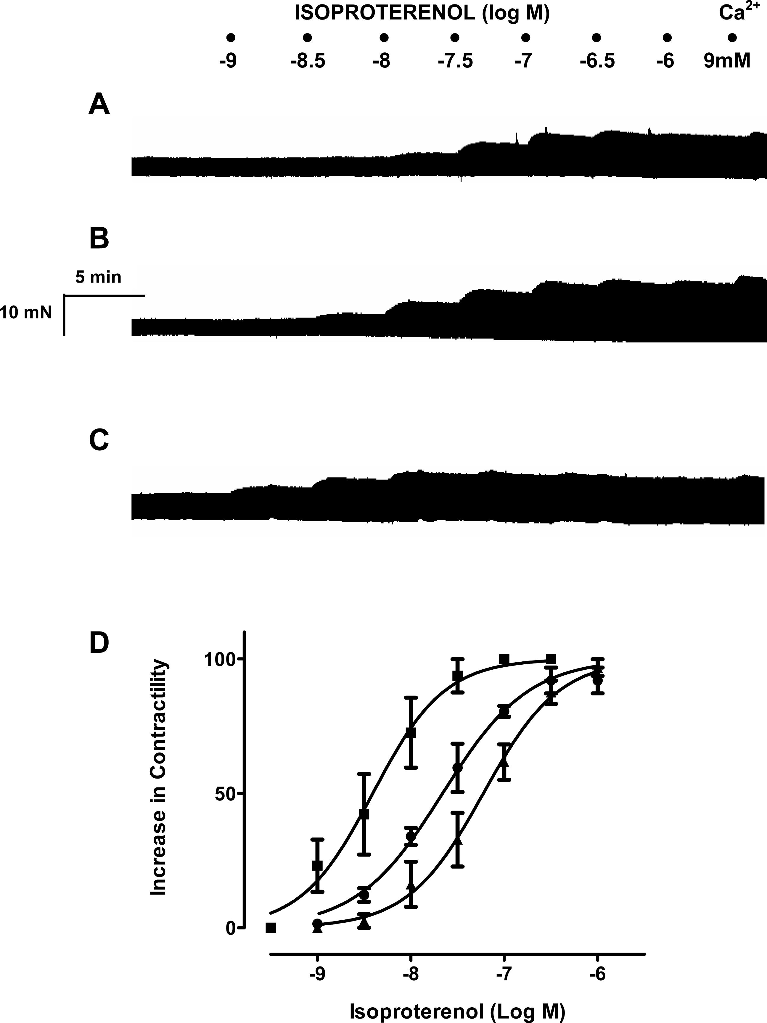 Resveratrol enhances the inotropic effect but inhibits the