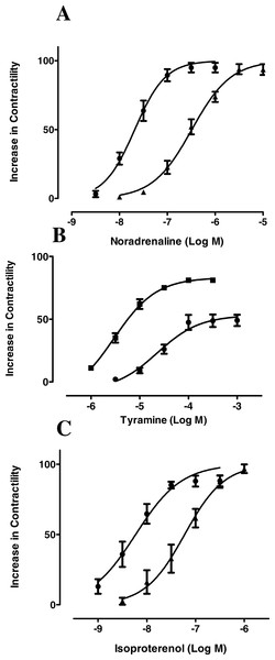 IBMX increases the inotropic effect of noradrenaline, tyramine and isoproterenol in rat ventricular myocardium.