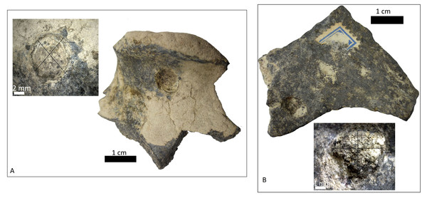 Indeterminate fragment of bone with puncture and amplification of the puncture with Dino-Lite measurements.