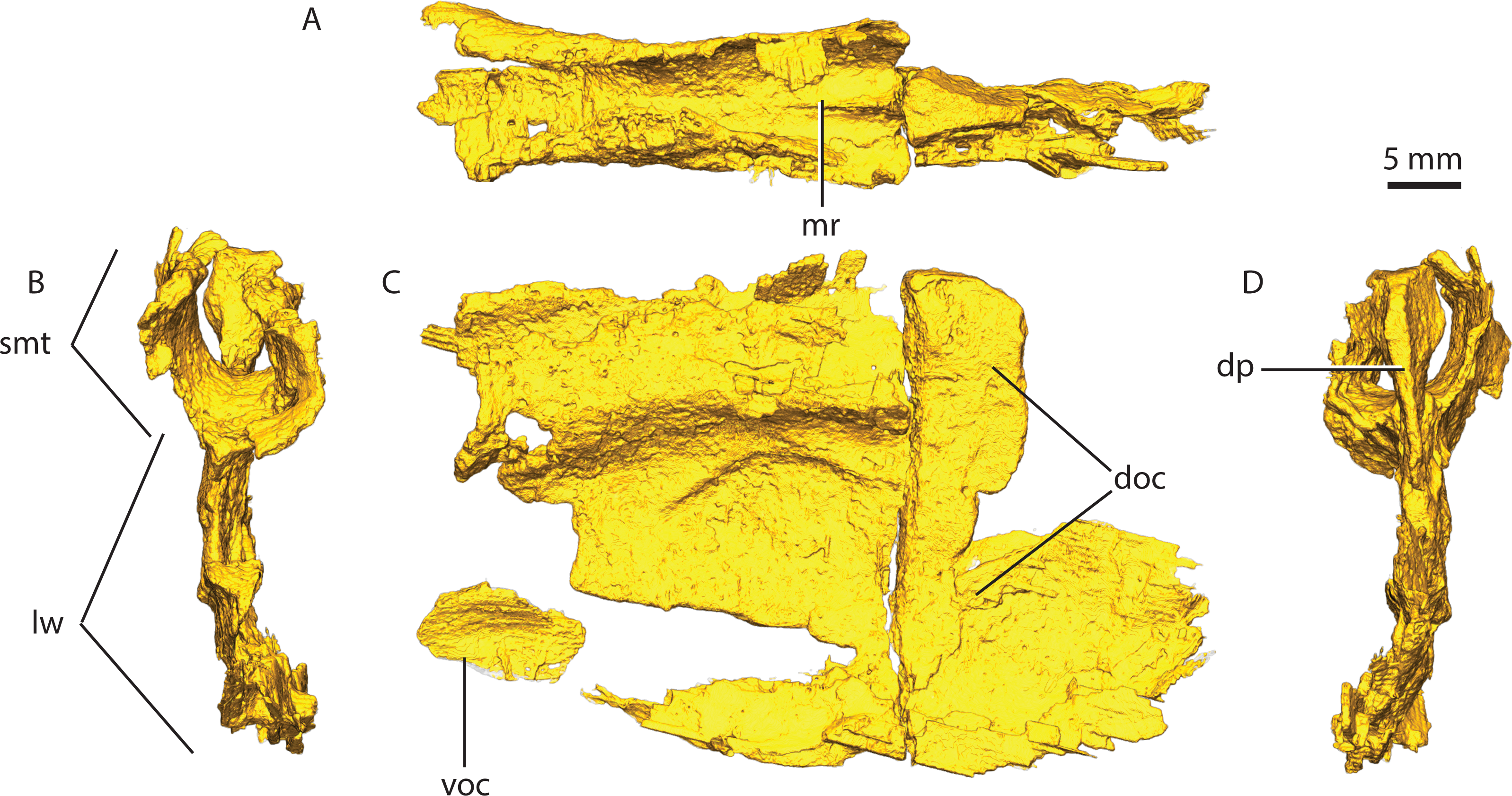 Aspects Of Gorgonopsian Paleobiology And Evolution Insights